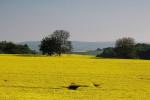 Rast produkcie biopalív prispieva k nedostatku potravín vo svete. Zdroj: http://www.panoramio.com