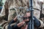 Ilustračná fotografia – mačiatko v rukách povstalca. Zdroj: www.rg.ru